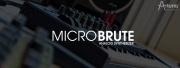 Le MicroBrute élu Roi des synthés analogiques !